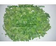 Moringa Dry Leaves Suppliers India