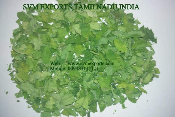 Moringa leaves exporter india